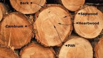 How-to-cutting-drying-wood-woodworking